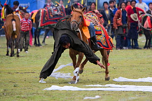 A Khampa warrior, mounted on his running Tibetan horse, tries to catch white scarves laid out on the ground, during the horse festival, near Huangyan, in the Garze Tibetan Autonomous Prefecture in the...  -  Kristel Richard