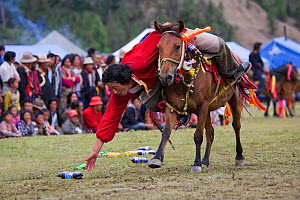 A Khampa warrior, mounted on his running Tibetan horse, tries to catch sweets laid out on the ground, during the horse festival, near Huangyan, in the Garze Tibetan Autonomous Prefecture in the Sichua...  -  Kristel Richard