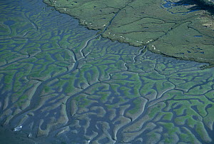 Aerial view of a salt marsh in the estuarine environment, with a pattern of tidal channels at low tide, Coos Bay, Oregon, USA. Note the mudflats covered with green algae. November 2007 - Visuals Unlimited