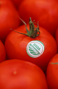 USDA label certifying that Tomatoes (Lycopersicon esculentum) are Organic - Visuals Unlimited