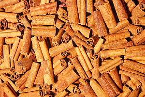 Cinnamon sticks (Cinnamomum cassia) from dried bark for use as a spice. Native to Southern China and India. - Visuals Unlimited