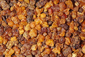 Myrrh gum resin (Commiphora molmol) for use as incense and herbal medication. Native to North Africa and the Middle East. - Visuals Unlimited
