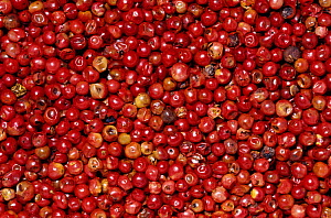 Dried pink and red Peppercorns or Peppers (Schinus molle) for use as a spice or herb, Native to South America.  -  Visuals Unlimited