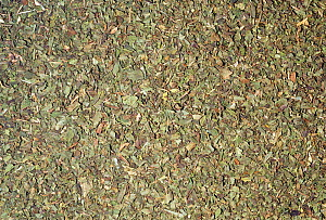 Dried Peppermint leaves (Mentha piperita) for use as a spice or herb. Native to Southern Europe.  -  Visuals Unlimited