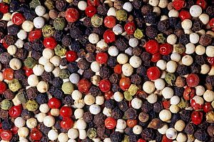 Mixed varieties of Peppercorn or Pepper fruits (Piper nigrum) for use as a spice or herb. Native to Southern India.  -  Visuals Unlimited