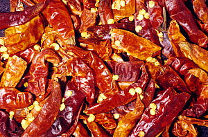 Dried hot Chili Peppers (Capsicum annuum) for use as a spice or flavouring. Native to Central and South America.  -  Visuals Unlimited