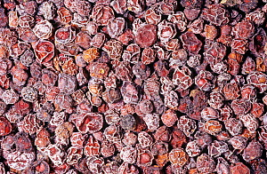 Dried Schisandra fruits or berries (Schisandra chinensis) for use as a spice or flavouring. Native to Northern China.  -  Visuals Unlimited