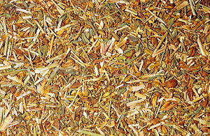 Dried parts of the St. John's Wort (Hypericum perforatum) plant used for herbal and medicinal purposes. Native to Europe. - Visuals Unlimited