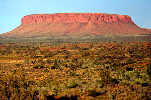 Mt. Connor, a mesa or tabular inselberg in the Central Australian desert with a hard sandstone cap and plateau on top. The plants in the foreground are Mulga bushes (Acacia), Spinifex, and Desert Popl...  -  Visuals Unlimited