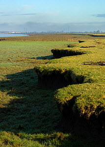 Characteristic eroded saltmarsh cliff features on the River Severn, with the Oldbury Power Station in the background (now being decomissioned with another larger replacement being considered), South G...  -  Toby Roxburgh