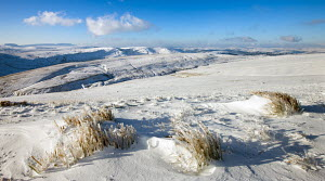 Frozen grass on the snow covered slopes of Pen y Fan mountain, Brecon Beacons National Park, Powys, Wales, UK. January 2010  -  Adam Burton