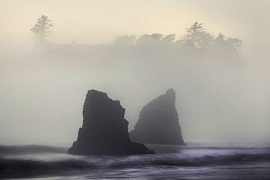 View of Pacific coastline in fog and mist, Ruby Beach, Olympic National Park, Washington, USA, June 2008  -  Floris van Breugel
