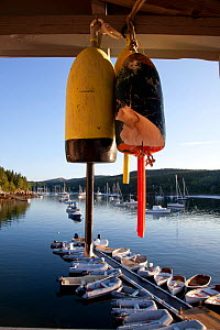 Hanging lobster buoys overlooking Maine harbour. Northeast Harbour, Maine, August 2010.  -  Billy Black