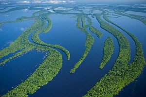 Aerial view of Anavilhanas Archipelago, Flooded forest, Rio Negro, Amazonia, Brazil, July 2008  -  Kevin Schafer