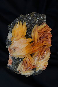 Barite (BaS04) on Cerrusite Mibladen Morocco Barite (orange) is the major ore of barium (barium sulfate) - Mineral class: sulfates - Barite is an important commercial mineral - Widely used as a pigmen...  -  John Cancalosi