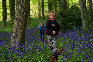 Young boy and girl playing in Bluebell (Hyacinthoides non-scripta) wood, Norfolk, UK, May. Model released  -  David Tipling