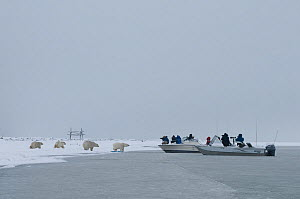 Photographers photographing of a group of curious Polar bears (Ursus maritimus) from motorboats along a barrier island during autumn freeze up, Barter Island, 1002 area of the Arctic National Wildlife...  -  Steven Kazlowski