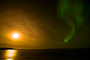 Northern lights (Aurora borealis) across the night sky as the late summer midnight sun travels eastward, over the Beaufort Sea, off shore from the 1002 area of the Arctic National Wildlife Refuge, Ala... - Steven Kazlowski