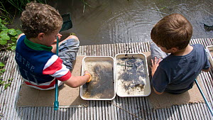 Two little boys enjoying a pond safari day at the Arundel Wetlands trust, Sussex, UK,  where children go netting and catch species of animals and insects in the ponds. Model released July 2010  -  Dan Burton