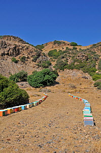 Colourful Honey bee (Apis mellifera) hives in fields, with mountainous landscape behind, Crete, Greece. July 2010  -  Adrian Davies