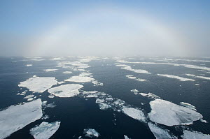 Fogbow over pack ice, Svalbard, Arctic Norway 2010  -  Kevin Schafer