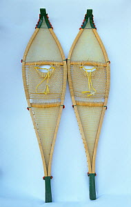 Two snowshoes, made from larch frames strung with sinew and dental floss by a cree woman from Mistasini. Quebec, Canada.  -  Bryan and Cherry Alexander