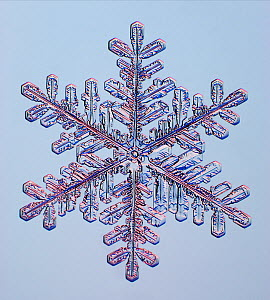 Snowflake, LM.  -  Visuals Unlimited