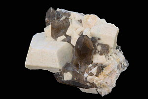 Microcline crystals and Smoky Quartz, Carroll County, New Hampshire, USA. - Visuals Unlimited