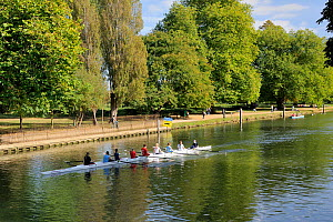 Rowing eight training on River Isis in Oxford, UK, September 2009. - Nick Upton