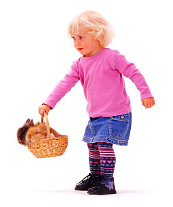 Young girl playing with rabbits in a basket. Model released  -  Jane Burton