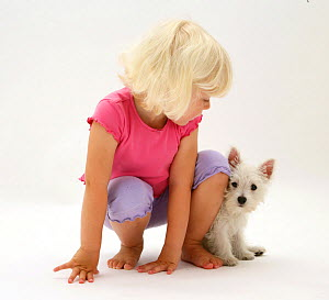 Young blonde haired girl sitting with West Highland White Terrier puppy. Model released  -  Jane Burton