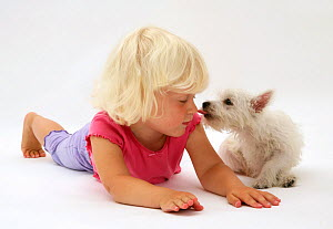 Young blonde haired girl being licked on the nose by a West Highland White Terrier puppy. Model released  -  Jane Burton