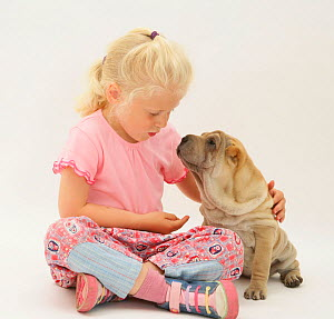 Young blonde haired girl playing with a Shar-pei puppy Model released  -  Jane Burton
