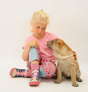 Portrait of young blonde haired girl sitting with a Shar-pei puppy Model released  -  Jane Burton
