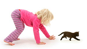 Young blonde haired girl chasing a black kitten. Model released  -  Jane Burton