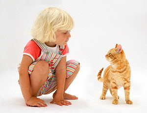 Portrait of young blonde haired girl sitting with ginger cat. Model released  -  Jane Burton