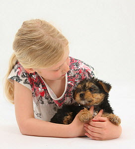 Portrait of young blonde haired girl and Yorkshire Terrier puppy, aged 7 weeks old Model released  -  Mark Taylor