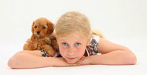 Portrait of young girl, lying down, with Cockerpoo (Cocker spaniel x Poodle) puppy, aged 7 weeks. Model released  -  Mark Taylor