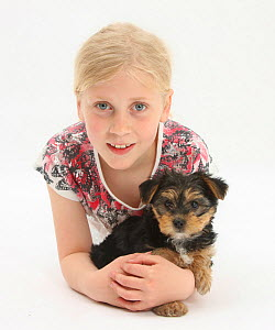 Portrait of young girl with blonde hair, with a Yorkshire terrier puppy, aged 7 weeks. Model released  -  Mark Taylor