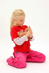 Portrait of young girl with blonde hair, aged 7, holding a ginger kitten, aged 7 weeks. Model released  -  Mark Taylor