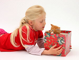 Portrait of young girl with blonde hair, aged 7, with a ginger kitten, aged 7 weeks peering out from within a box. Model released  -  Mark Taylor
