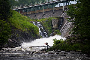 Man fly-fishing on the Connecticut River just below the dam of First Connecticut Lake, Pittsburg, New Hampshire, USA, Connecticut River Headwaters region, July 2006  -  Jerry Monkman