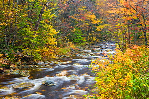 Roaring Brook, a tributary of Batten Kill river, in the Green Mountain National Forest, Sunderland, Vermont, USA, October 2009 - Jerry Monkman