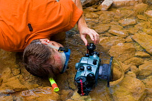 Photographer Inaki Relanzon wearing snorkel and mask while photographing Pyrenean brook salamander (Euproctus asper) in stream, Pyrenees mountains, Catalonia, Spain.  -  Inaki Relanzon