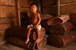 Boy sitting on rolls of Balata made from latex collected from Balata / Bullet Wood tree, Nappi, Rupununi, Guyana, used for crafts, February 2010  -  Pete Oxford
