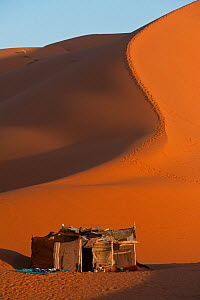 Berber tent in the Dunes of Erg Chebbi, near the village of Merzouga, Morocco, June 2009 - Pete Oxford