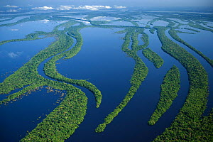 Aerial view of flooded rainforest / varzea, Anavilhanas Archipelago, Rio Negro, Amazonia, Brazil, July 2008  -  Kevin Schafer