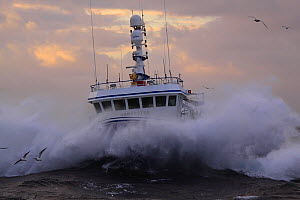 "Fishing vessel ""Harvester"" on a stormy North Sea. Europe, November 2010. Property released.  -  Philip Stephen"
