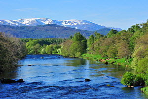The River Spey near Aviemore with the Cairngorm mountains covered in snow in the background, near Aviemore, Highlands, Scotland, UK, May 2010  -  Philippe Clement