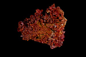 Vanadinite [Pb5(VO4)3Cl - Lead Chlorovanadate] crystals from Mibladen, Morrocco, One of the main ores of vanadium and a minor ore of lead  -  John Cancalosi
